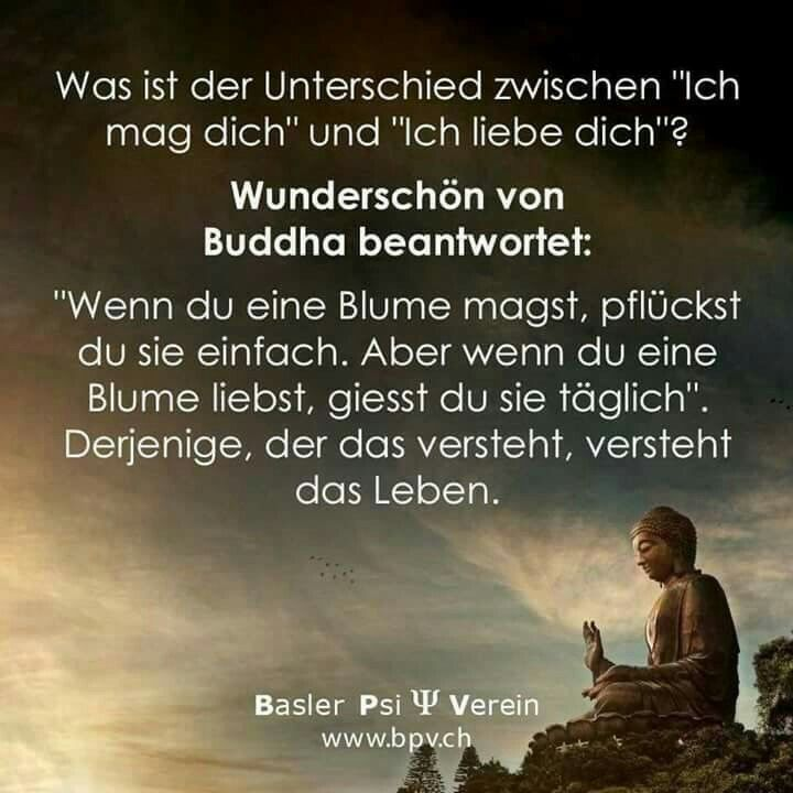 du magst mich nur ... | love | Quotes, Quotations, Buddha quote