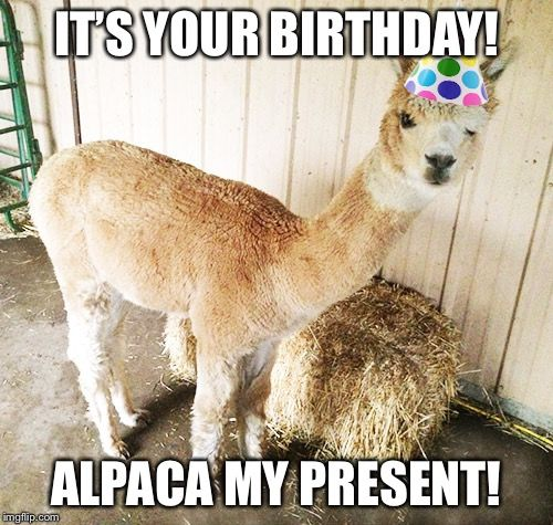 Alpaca Birthday | Alpacas | Happy birthday animals, Llama birthday ...